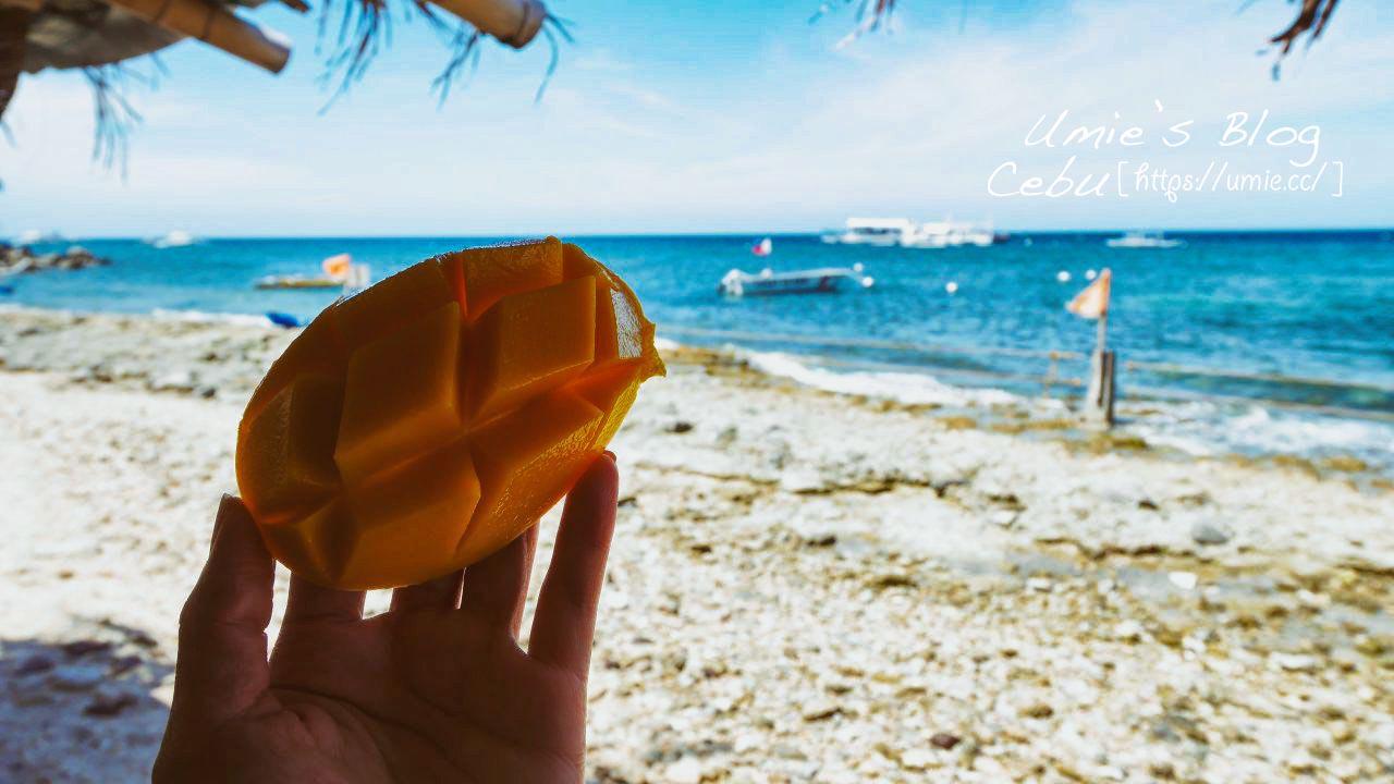 菲律賓宿霧 Day10|杜馬蓋地 Dumaguete 阿波島APO 近距離和海龜一起游泳!超值得來!!