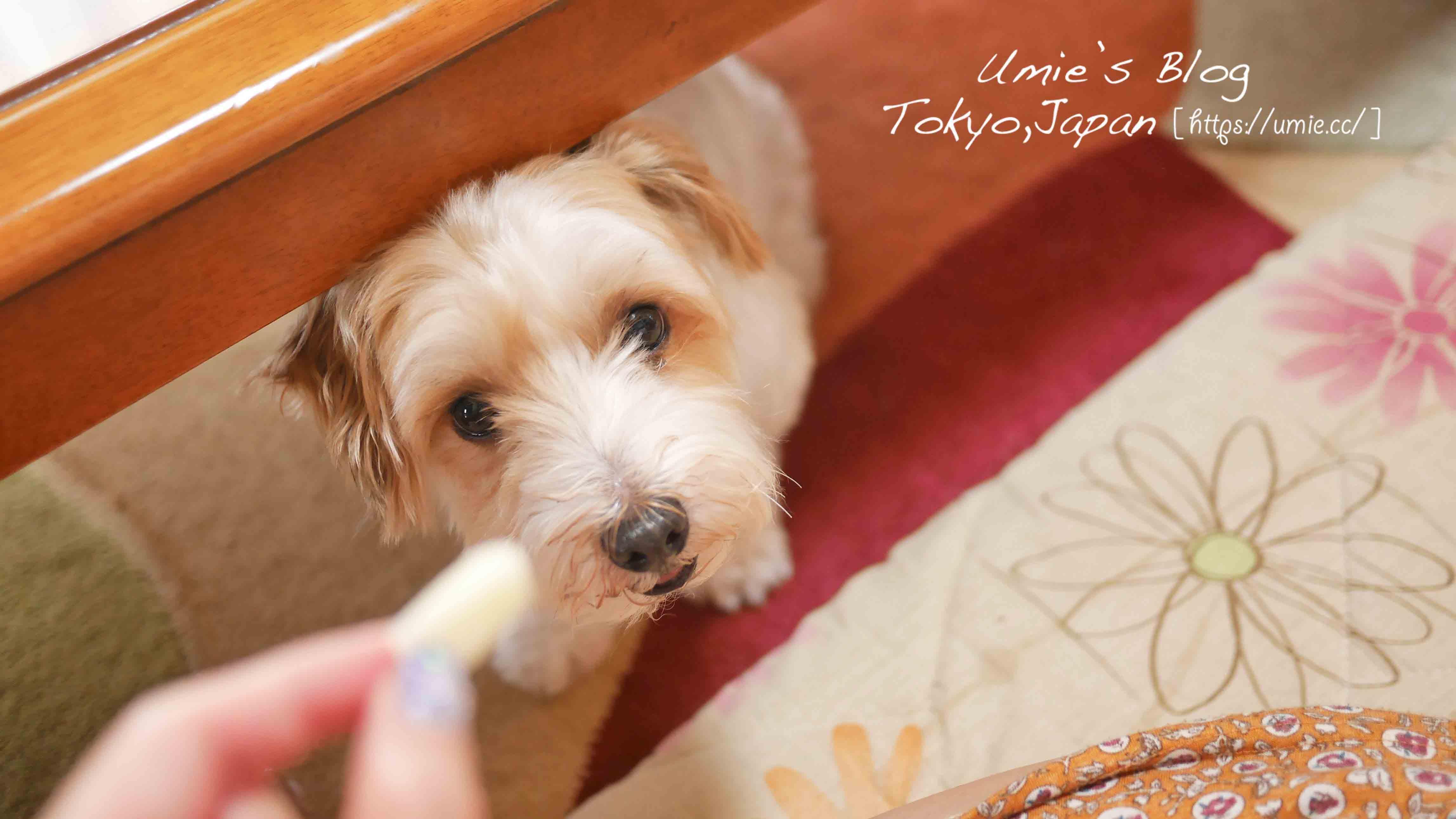 在日本,買一隻純種的狗狗要 40 萬元日幣 (約台幣 13 萬元) 養寵物前,你需要知道的 10 件事。有養狗/貓念頭的人必看!
